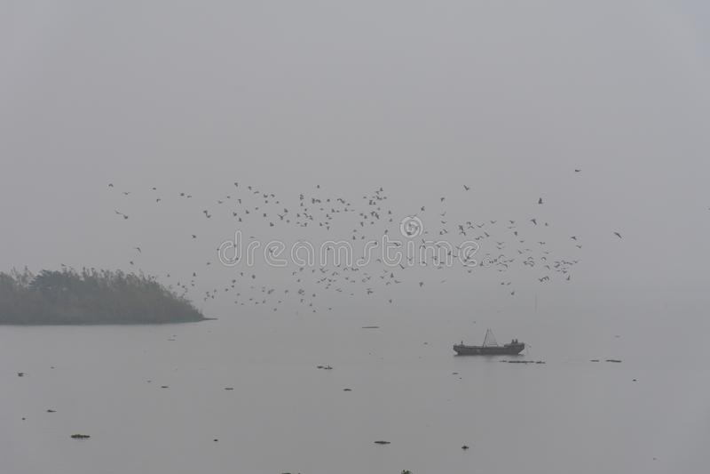 Dimmig morgon med en flock av fåglar arkivfoton