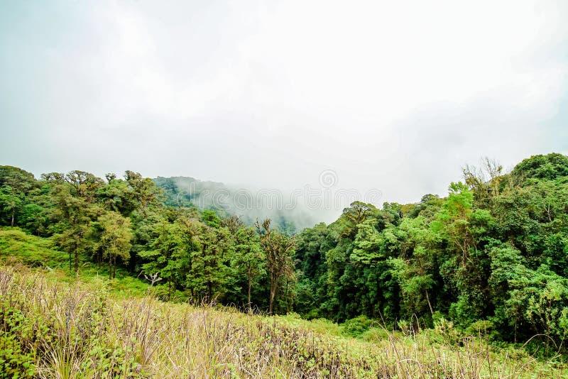 Dimmig morgon på berget, Doi Inthanon det nordligast av Siam, Chiang Mai, Thailand arkivfoto