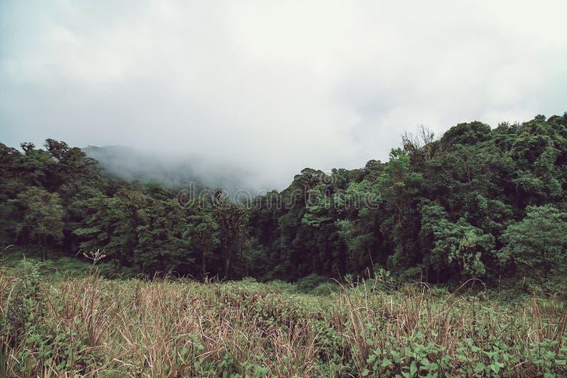 Dimmig morgon på berget, Doi Inthanon det nordligast av Siam, Chiang Mai, Thailand arkivbild