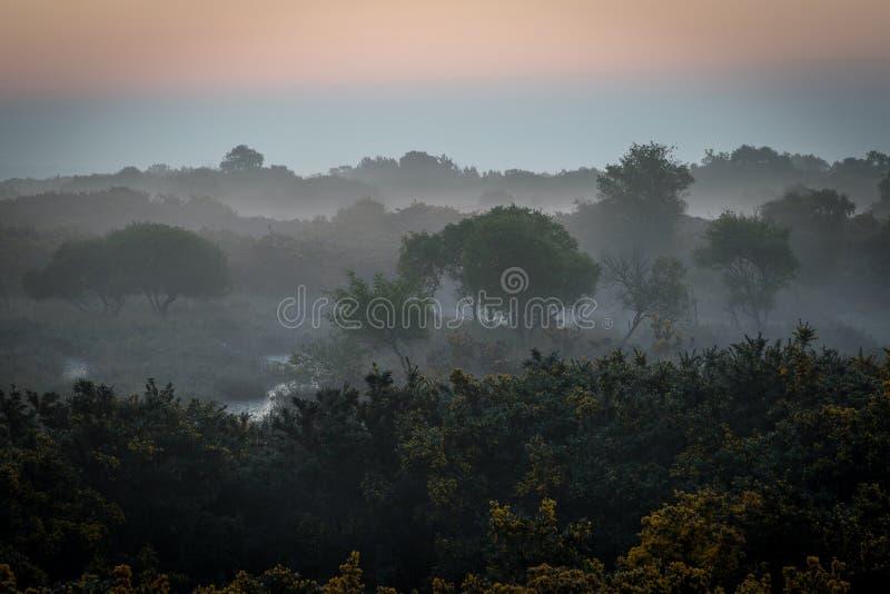 Dimmig morgon på heathland fotografering för bildbyråer