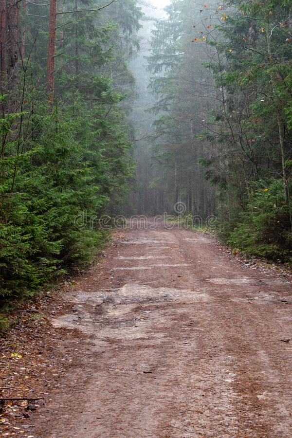 dimmig morgonbana för skog arkivfoto