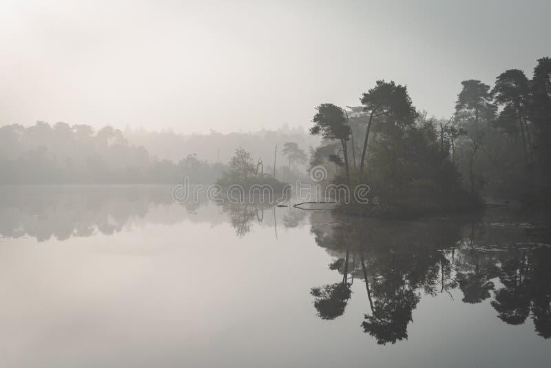 Dimmig morgondimma över sjön med träd i reflexion Ochtend mist över ven i de Oisterwijkse bossen en för att vennen arkivbilder