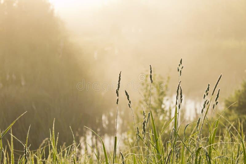Dimmig morgonsikt över vattnet arkivbilder