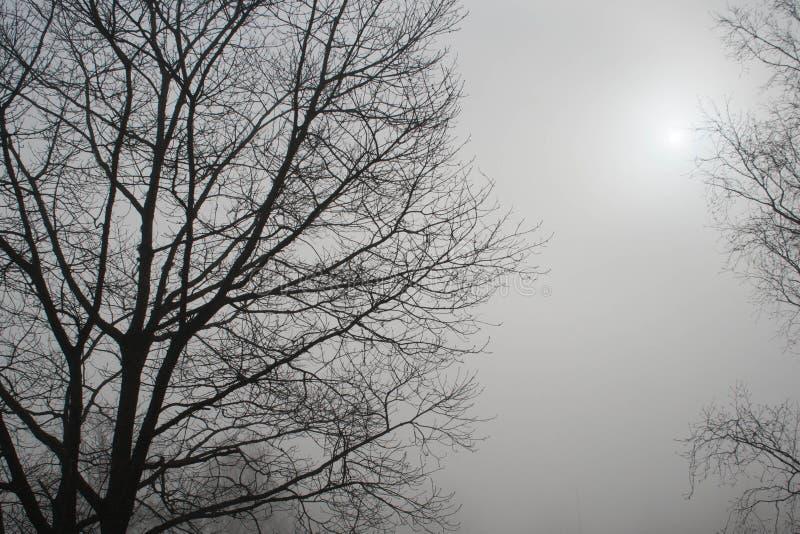 Dimmig morgonsikt med sol- och svartträdkonturer arkivbild