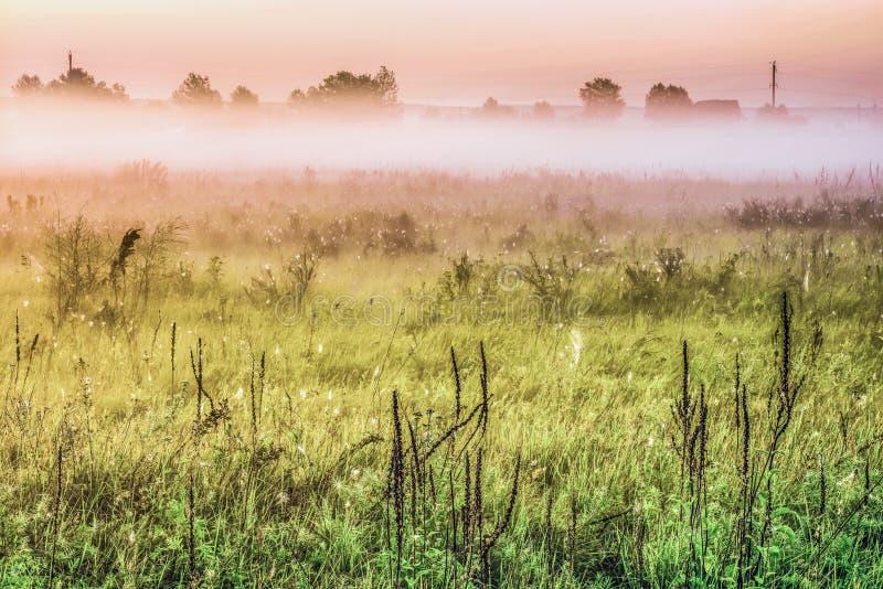 Dimmig morgonsoluppgång för sommar över ängar royaltyfria bilder