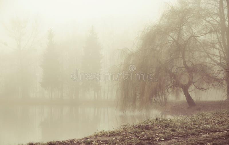Dimmig moring i fridsamt ställe arkivbild