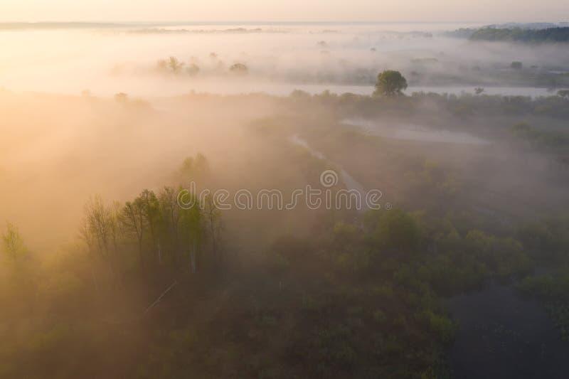 Dimmig natur för scenisk sommar från över Flyg- sikt på flodkust med träd i solsken royaltyfria foton