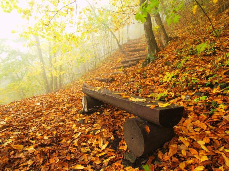 Dimmig och solig gryning för hösten på bokträdskogen, gammal övergiven bänk nedanför träd Dimma mellan bokträdfilialer royaltyfri bild