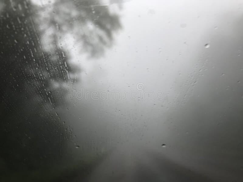 Dimmig pinjeskog och väg med att regna i kall morgon royaltyfria foton