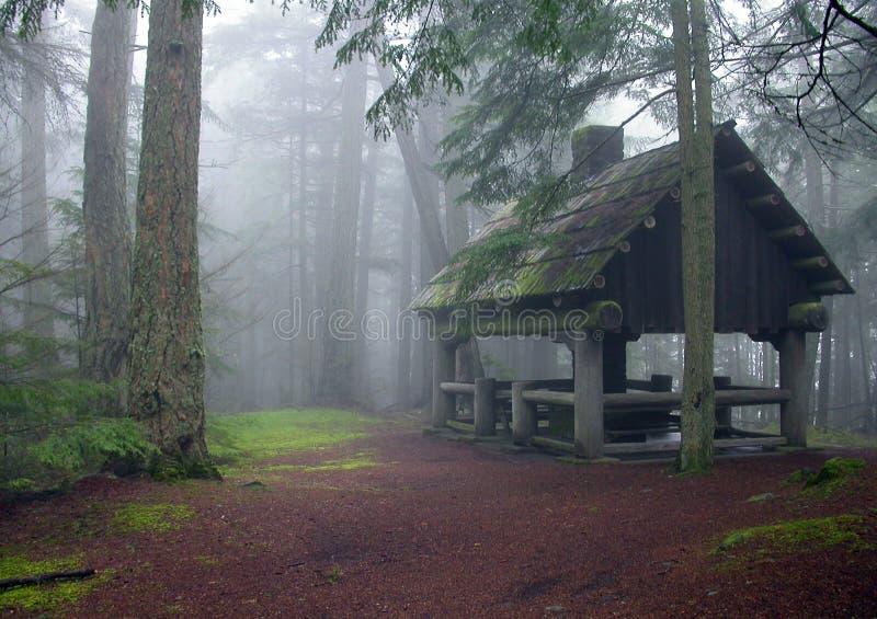 dimmig scenisk skogsmark för koja royaltyfria bilder