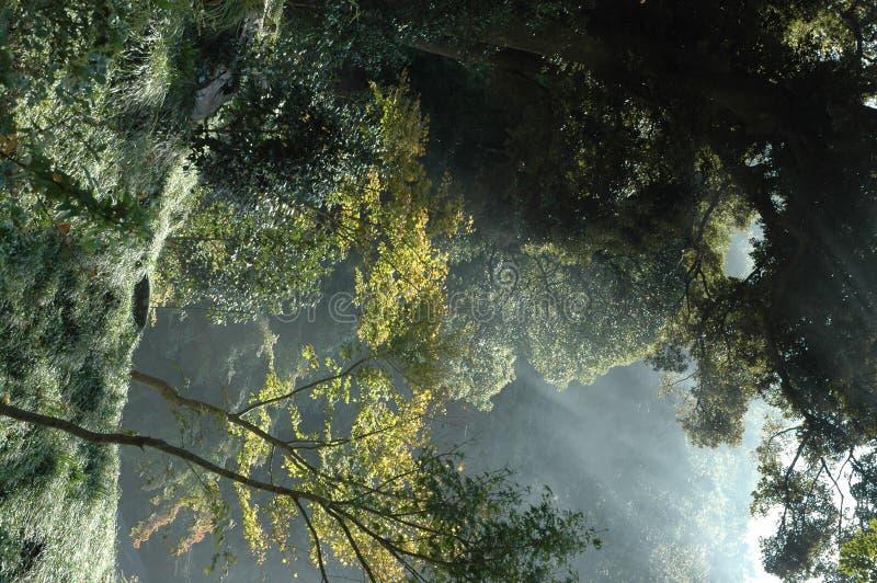 dimmig skog royaltyfri bild