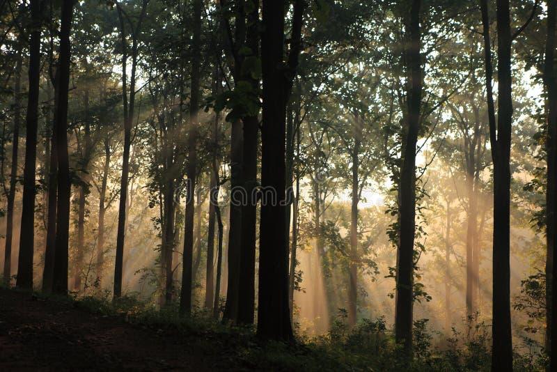 Dimmig skog i Wayanaden, Kerala, Indien arkivfoto