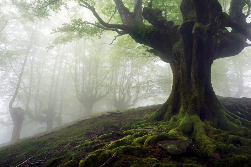 Dimmig skog med mystiska träd royaltyfri foto