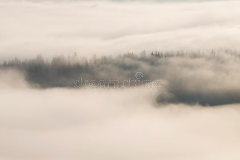 Dimmig skog, på soluppgång arkivbild