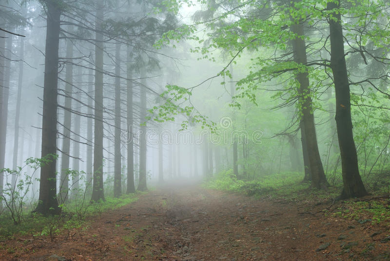 Dimmig skogbana royaltyfri foto
