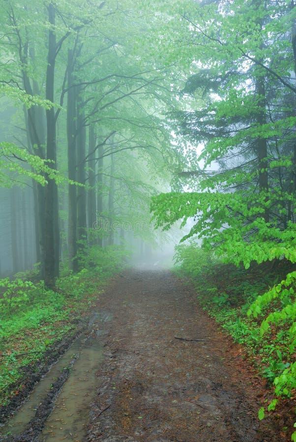 Dimmig skogbana fotografering för bildbyråer