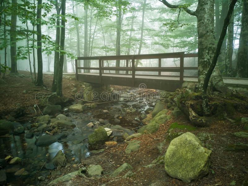 Dimmig skogbro över liten vik royaltyfria foton