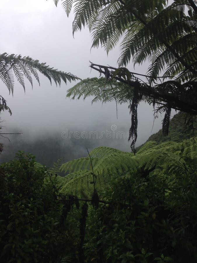 Dimmig skogsikt royaltyfri bild