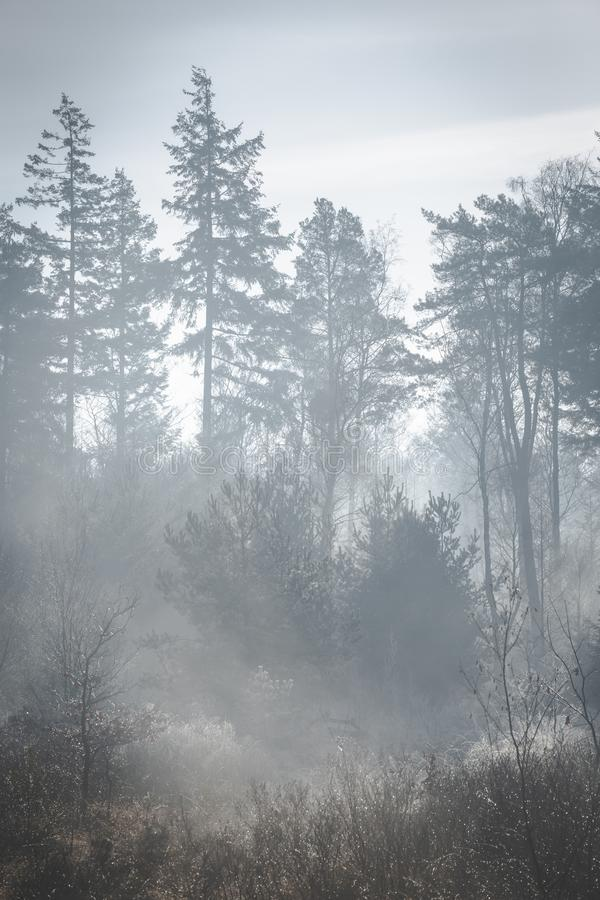 Dimmig solig morgon med solljusbelysning upp jordningen Trädkonturer royaltyfri fotografi