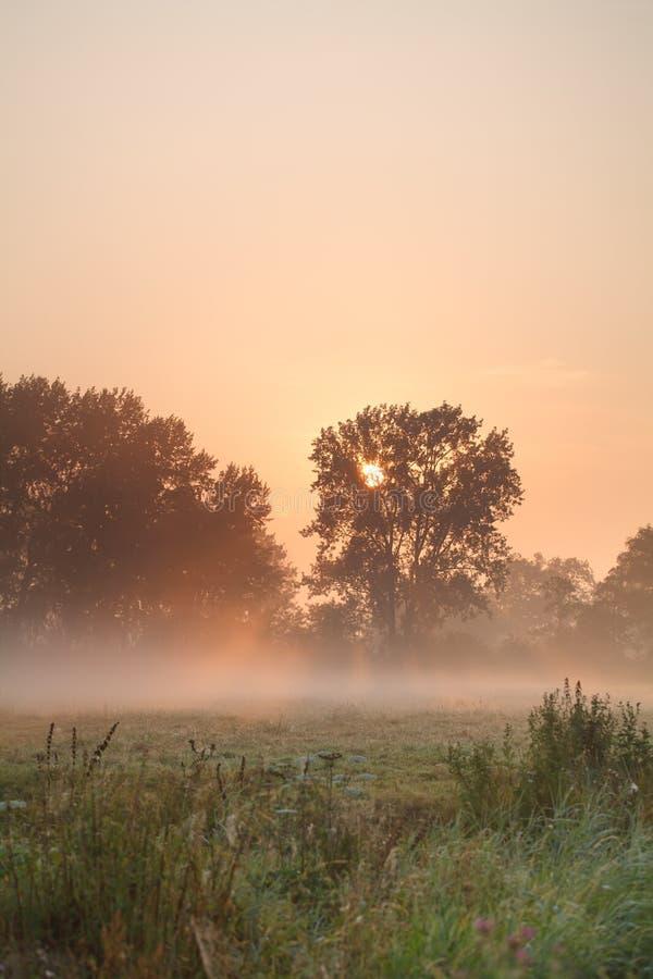 Dimmig soluppgång för sommar royaltyfri fotografi
