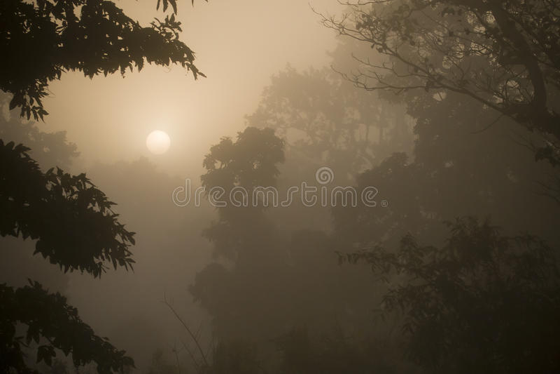 Dimmig soluppgång i djungelskog i Nepal royaltyfria foton