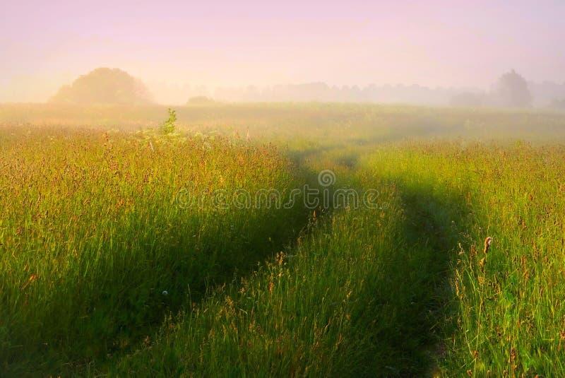 Dimmig sommarmorgon i Litauen Mycket trevlig äng, slingrig väg arkivfoto