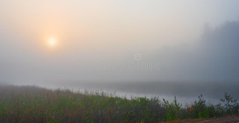 Dimmig sommarmorgonsoluppgång på en träskvåtmark royaltyfri foto