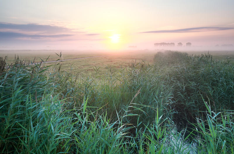 Dimmig sommarsoluppgång över äng fotografering för bildbyråer