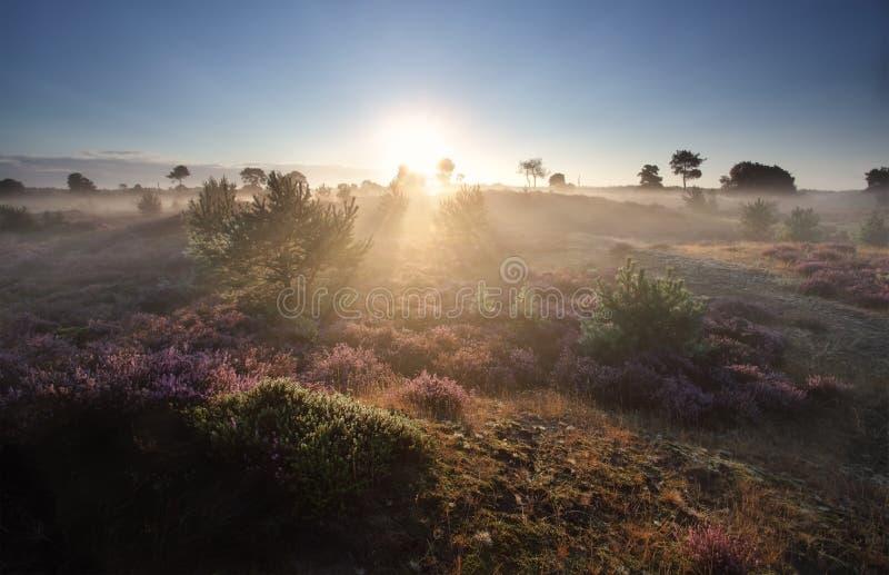 Dimmig sommarsoluppgång över blomningljung arkivfoto