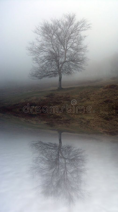 dimmig tree arkivfoto
