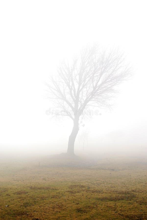dimmig tree royaltyfri foto