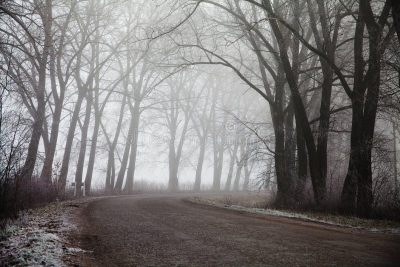 Dimmig väg och träd Mystisk skogbakgrund Ottalandskap, frost på jordningen oväsenfilmeffekt arkivbilder