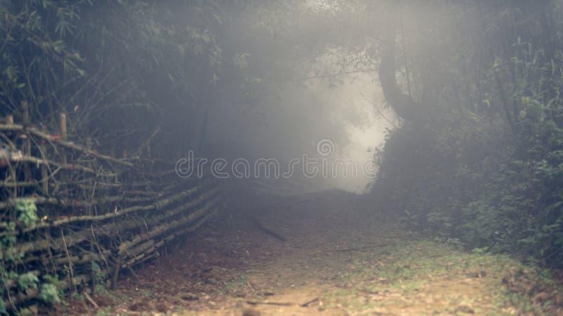 Dimmig väg till och med bambuskog i Sa-PA-dalen royaltyfria bilder