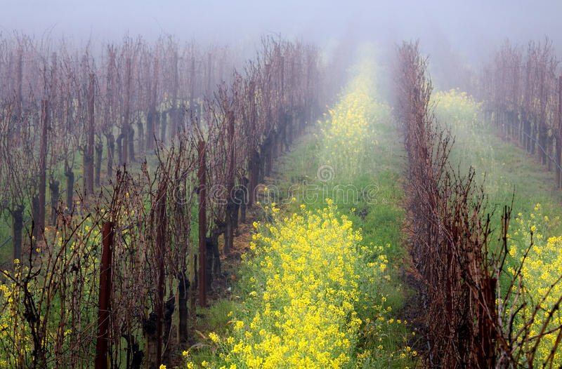dimmig vingård arkivfoton