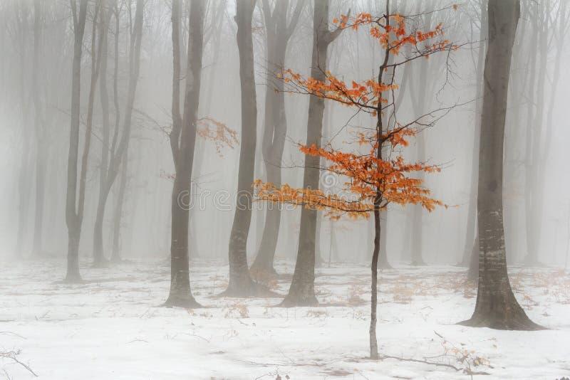 Den dimmiga vintern landskap in i skogen arkivfoto
