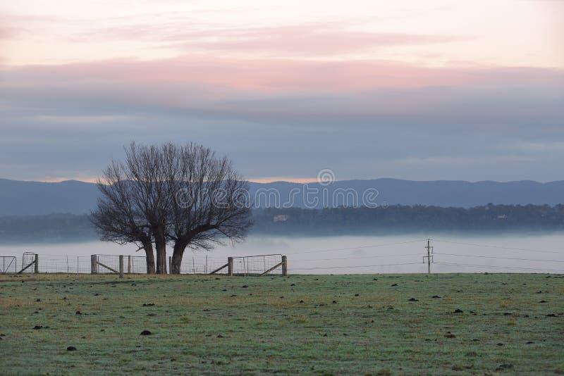 Dimmig vintermorgonbygd och trädkontur royaltyfri foto