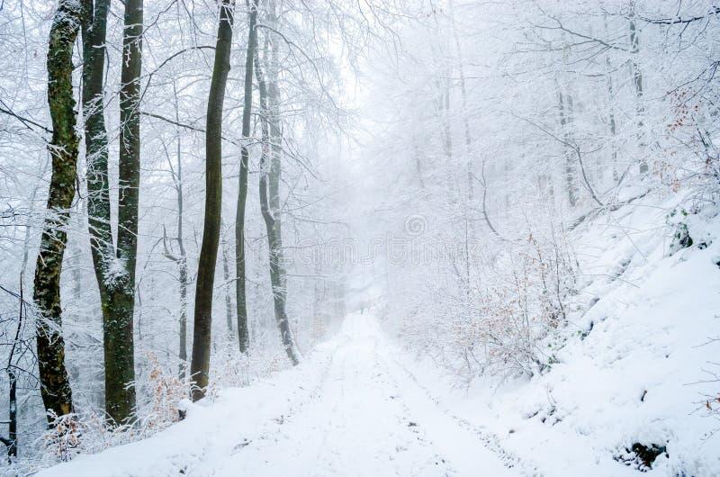 Dimmig vinterskog arkivfoton