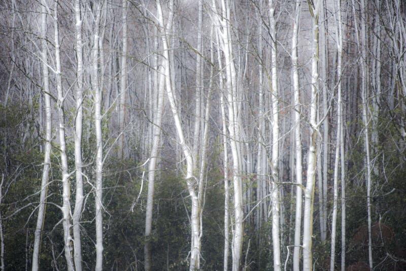 Dimmig vinterskogbakgrund