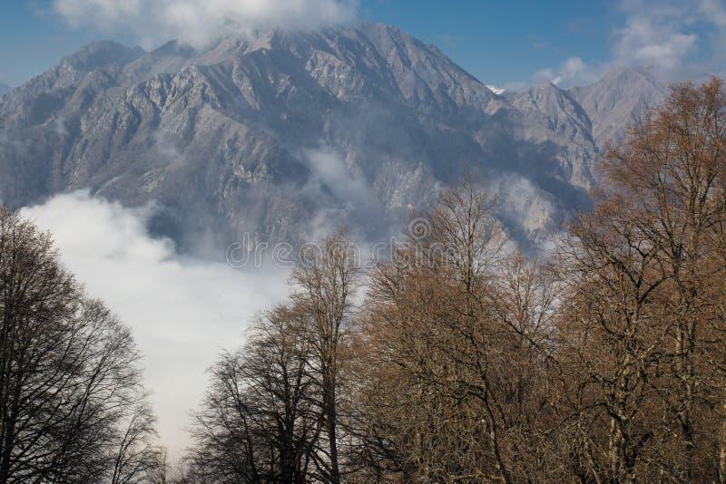 Dimmiga berg och träd avbildar arkivbilder
