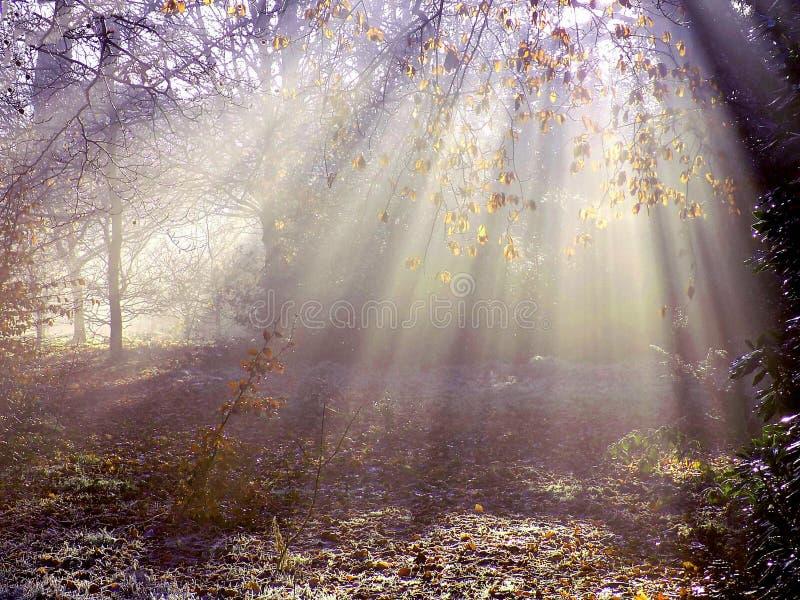 Dimmiga ljusa strålar i höst royaltyfria bilder