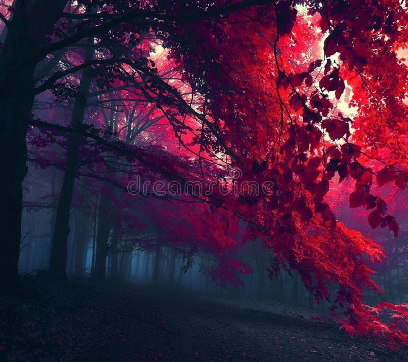 Dimmiga röda trän arkivbild