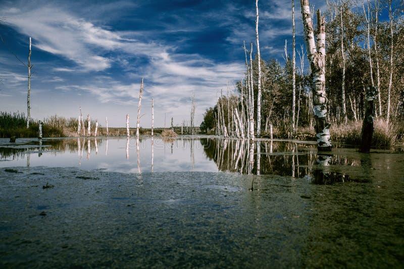 Dimmiga träsk i höst Kallt melankoliskt landskap med vatten va arkivfoton