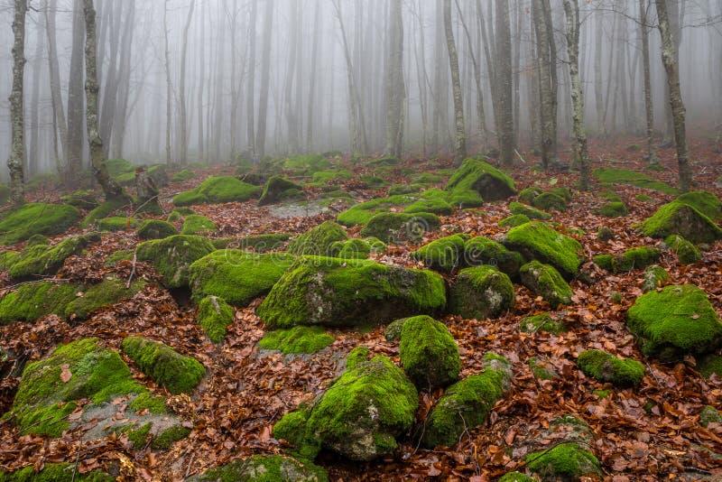 Dimmigt bestrött med den mossiga stenblockberglutningen i höstbokträdskog royaltyfri bild