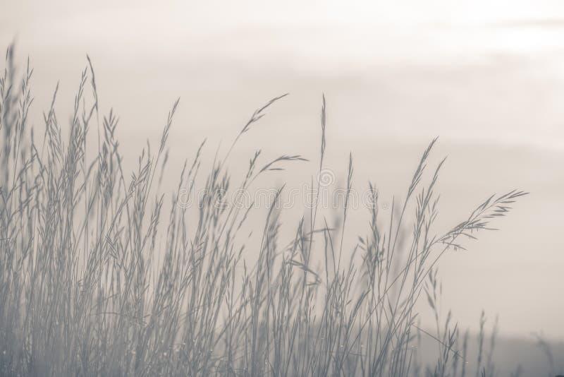 Dimmigt höstlandskap, naturbakgrundsbegrepp, mjuk fokus, varma pastellfärgade signaler arkivbild