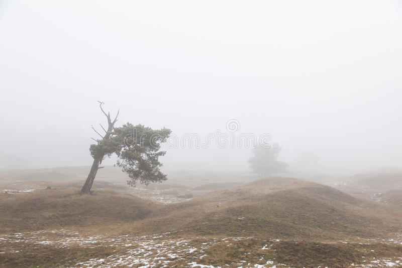 Dimmigt sörja träd och den insnöade vintern på hed nära zeist i nen royaltyfri foto