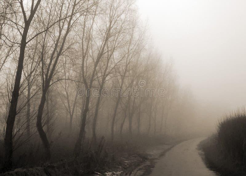 dimmigt spår för land arkivfoton