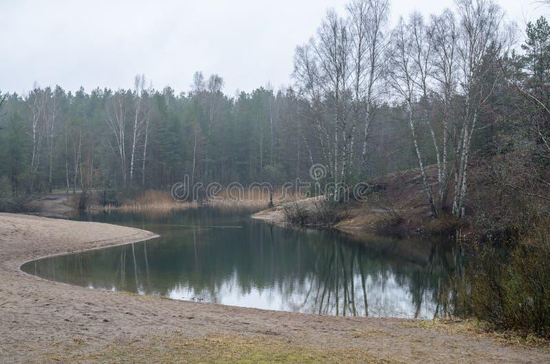 Dimmigt vårlandskap i skogsjön fotografering för bildbyråer