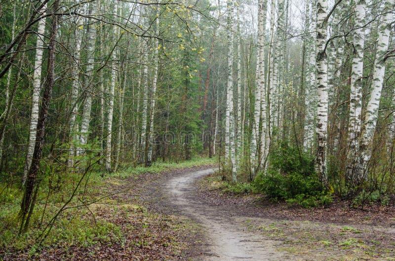 Dimmigt vårlandskap med vandringsledet i träna royaltyfria bilder
