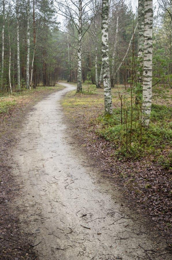 Dimmigt vårlandskap med vandringsledet i träna royaltyfri foto