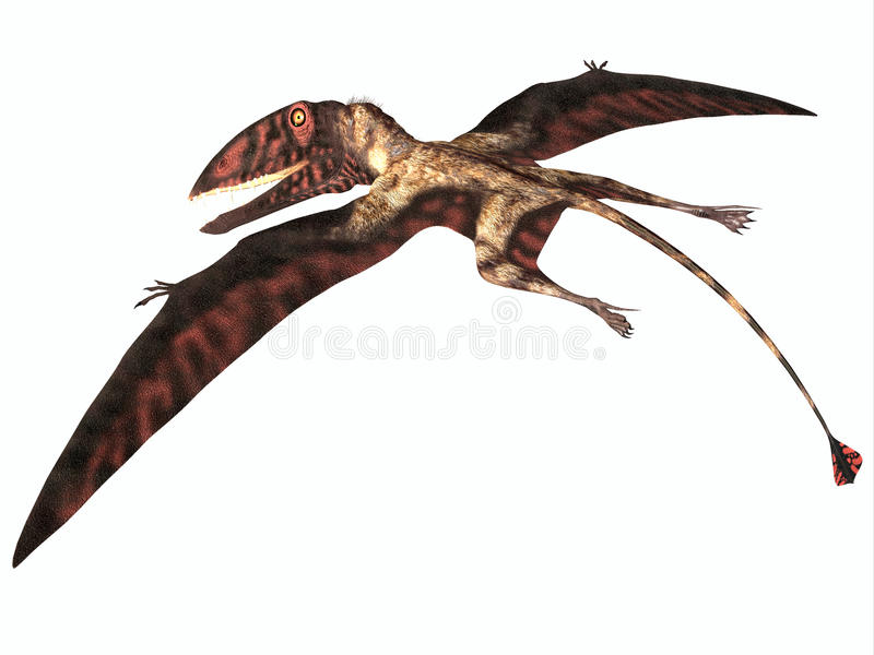 Dimorphodon på vit vektor illustrationer